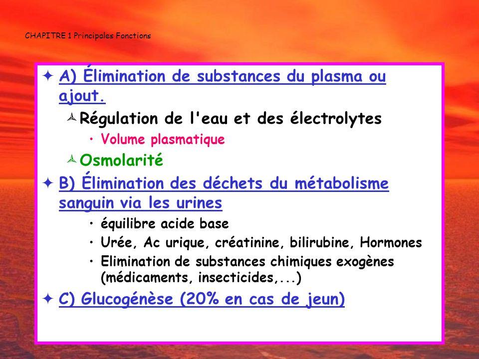 CHAPITRE 1 Principales Fonctions A) Élimination de substances du plasma ou ajout. Régulation de l'eau et des électrolytes Volume plasmatique Osmolarit
