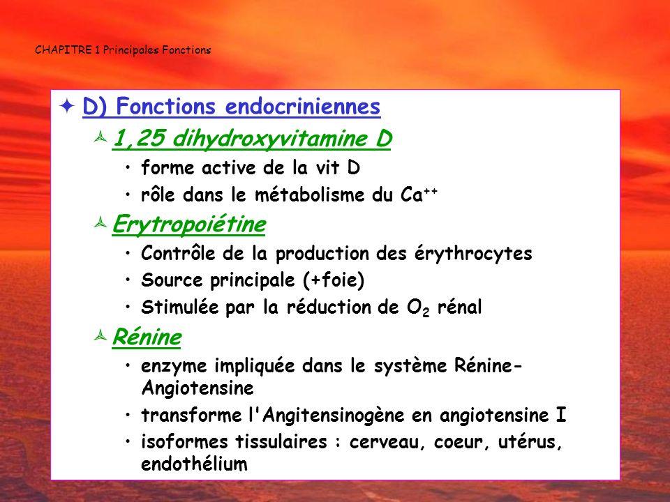 CHAPITRE 1 Principales Fonctions D) Fonctions endocriniennes 1,25 dihydroxyvitamine D forme active de la vit D rôle dans le métabolisme du Ca ++ Erytr