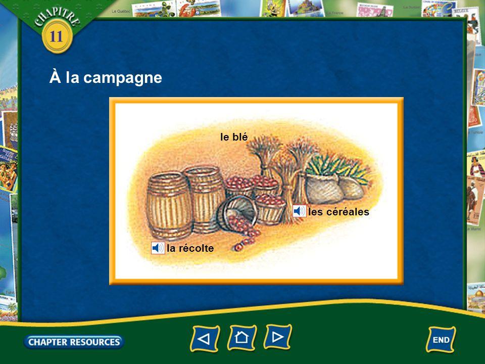 11 À la campagne Lagriculteur cultive (travaille) la terre.