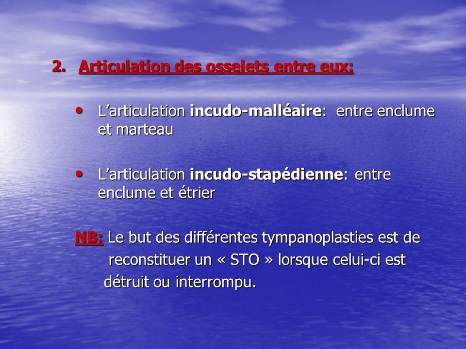 2.Articulation des osselets entre eux: Larticulation incudo-malléaire: entre enclume et marteau Larticulation incudo-malléaire: entre enclume et marte