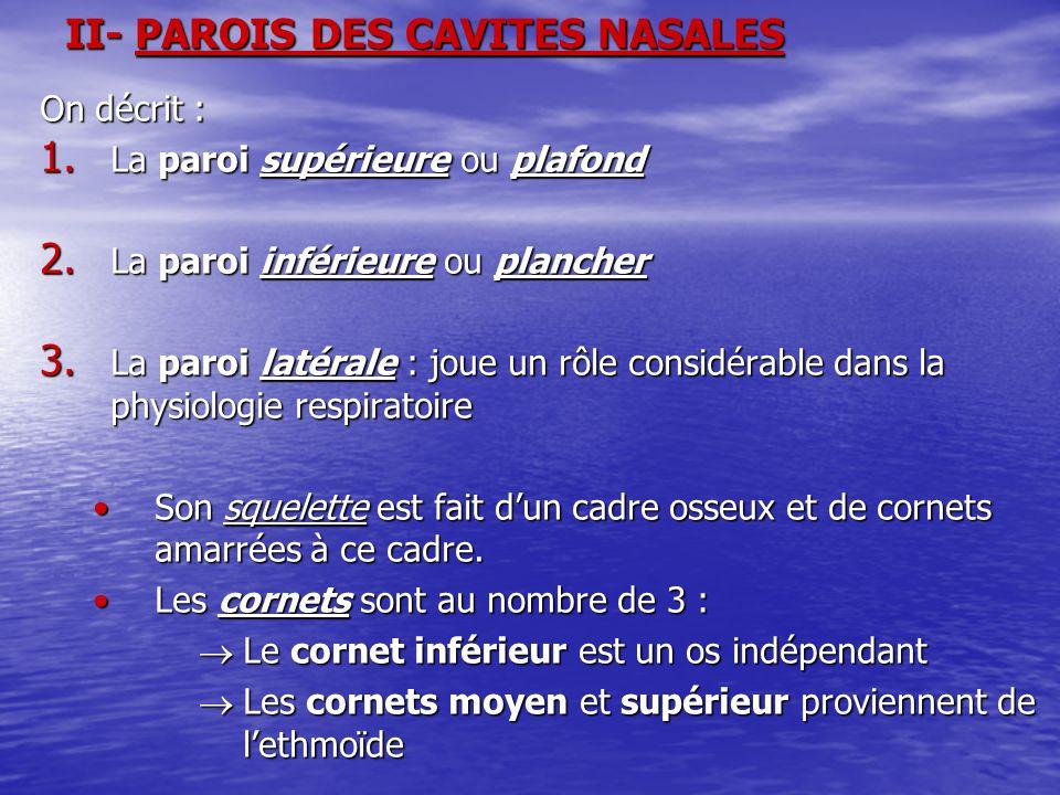 II- PAROIS DES CAVITES NASALES On décrit : 1. La paroi supérieure ou plafond 2. La paroi inférieure ou plancher 3. La paroi latérale : joue un rôle co