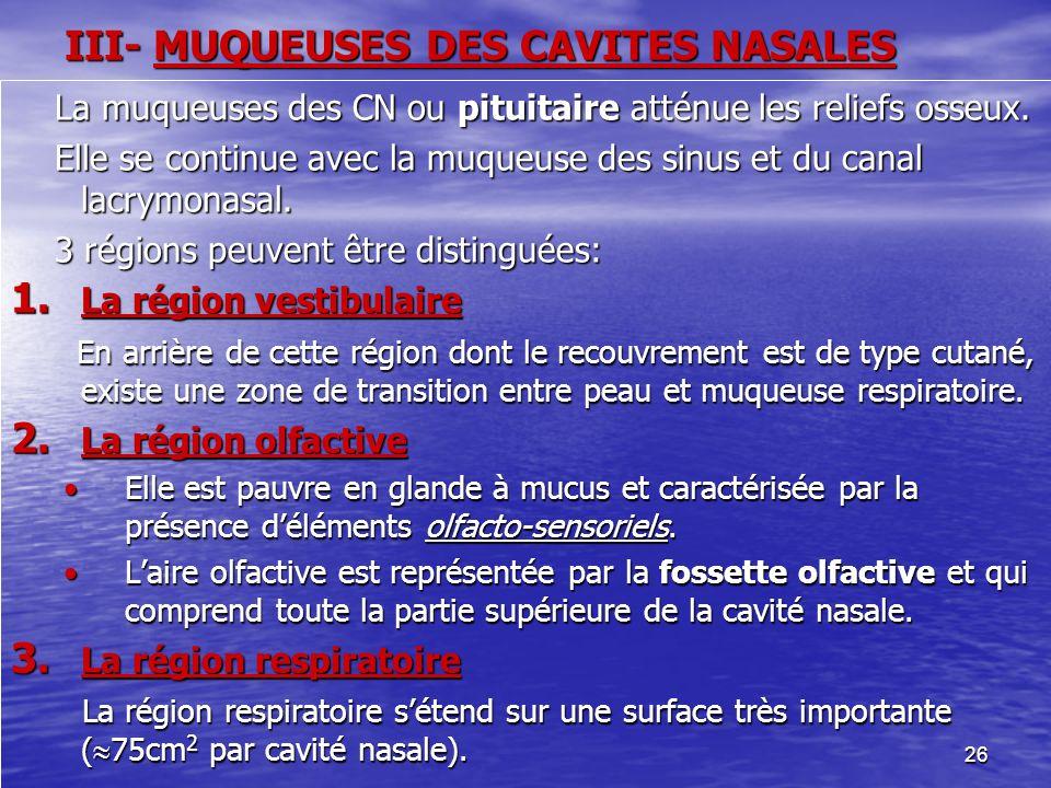 26 III- MUQUEUSES DES CAVITES NASALES La muqueuses des CN ou pituitaire atténue les reliefs osseux. La muqueuses des CN ou pituitaire atténue les reli