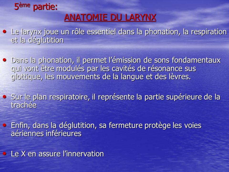 5 ème partie: ANATOMIE DU LARYNX Le larynx joue un rôle essentiel dans la phonation, la respiration et la déglutition Le larynx joue un rôle essentiel