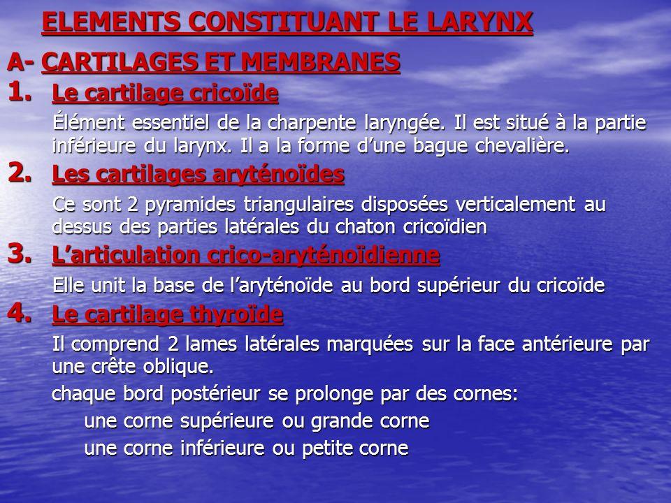 ELEMENTS CONSTITUANT LE LARYNX A- CARTILAGES ET MEMBRANES 1. Le cartilage cricoïde Élément essentiel de la charpente laryngée. Il est situé à la parti