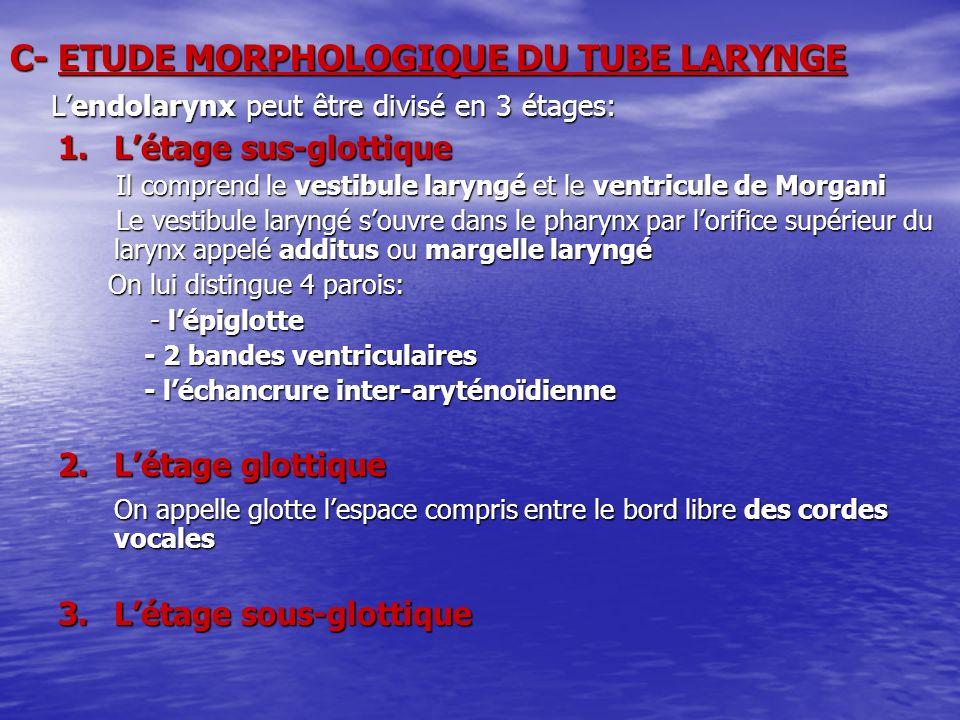 C- ETUDE MORPHOLOGIQUE DU TUBE LARYNGE Lendolarynx peut être divisé en 3 étages: Lendolarynx peut être divisé en 3 étages: 1.Létage sus-glottique Il c