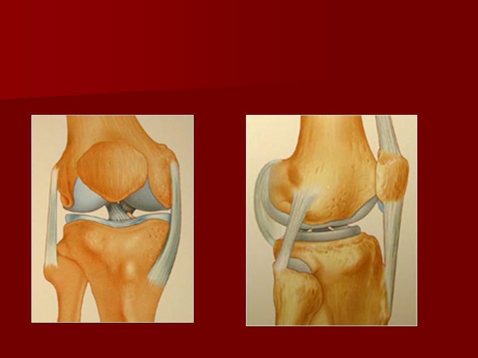 Examen clinique Palper linterligne fémoro-tibial : Palper linterligne fémoro-tibial : rechercher une douleur caractéristique à la pression « signe de Oudard ou cri du ménisque ».