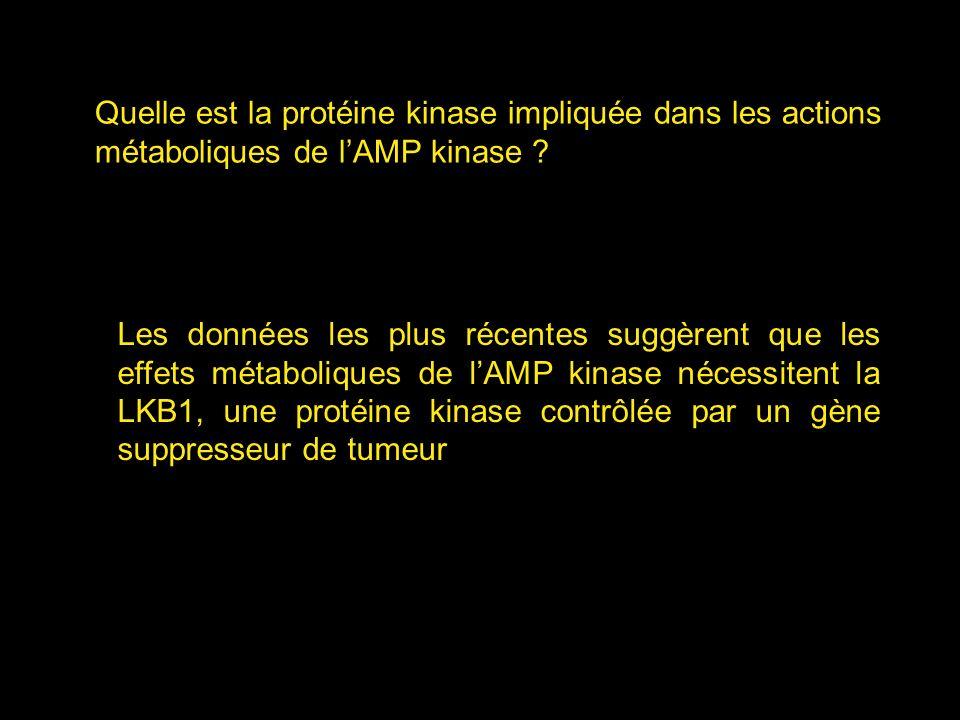 Quelle est la protéine kinase impliquée dans les actions métaboliques de lAMP kinase ? Les données les plus récentes suggèrent que les effets métaboli