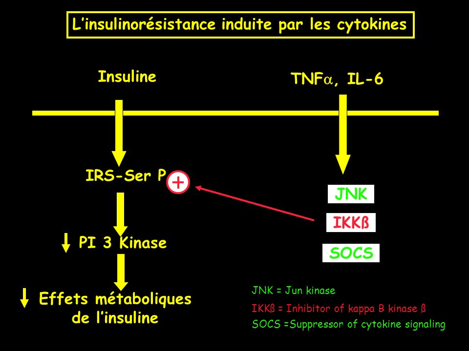 TNF, IL-6 IRS-Ser P PI 3 Kinase Effets métaboliques de linsuline Insuline Linsulinorésistance induite par les cytokines IKKß JNK = Jun kinase JNK SOCS IKKß = Inhibitor of kappa B kinase ß SOCS =Suppressor of cytokine signaling