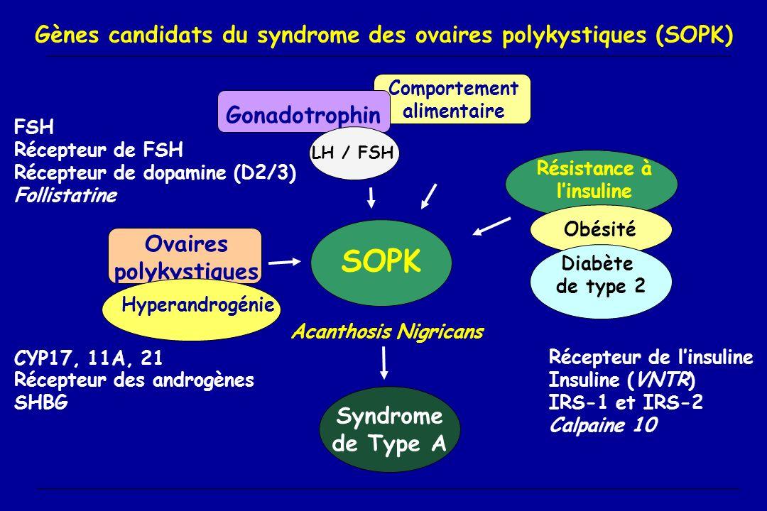 Gènes candidats du syndrome des ovaires polykystiques (SOPK) SOPK Résistance à linsuline Comportement alimentaire Gonadotrophin es LH / FSH Ovaires po
