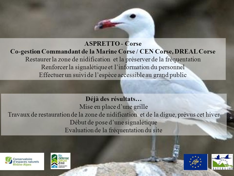 Défense Nature 2 Mil ASPRETTO - Corse Co-gestion Commandant de la Marine Corse / CEN Corse, DREAL Corse Restaurer la zone de nidification et la préser