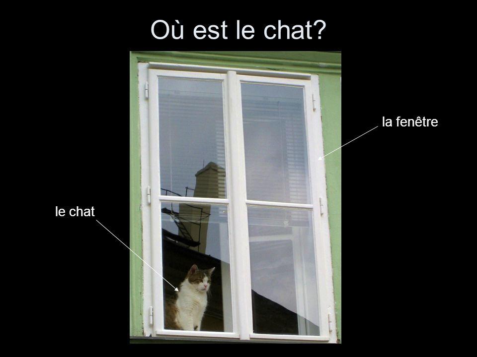 Où est le chat le chat la fenêtre