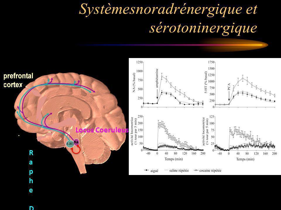 Systèmesnoradrénergique et sérotoninergique 5-HT Raphe DorsalRaphe Dorsal Locus Coeruleus