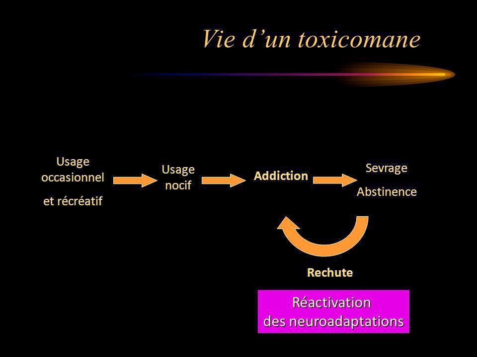 Vie dun toxicomane Addiction Usage nocif Usage occasionnel et récréatif Sevrage Abstinence Rechute Réactivation des neuroadaptations