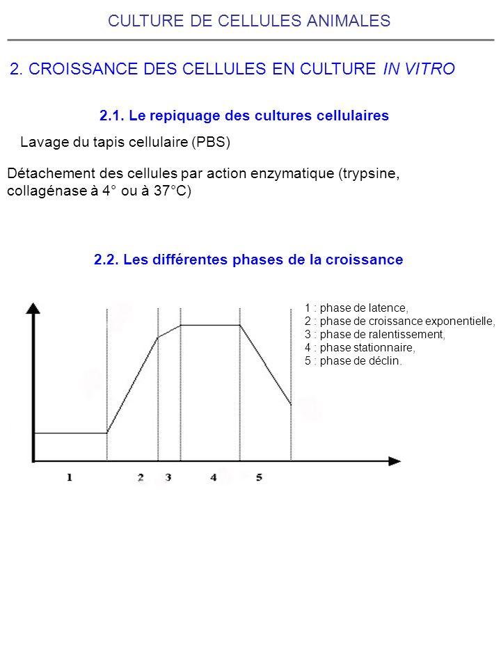 CULTURE DE CELLULES ANIMALES 2. CROISSANCE DES CELLULES EN CULTURE IN VITRO 1 : phase de latence, 2 : phase de croissance exponentielle, 3 : phase de