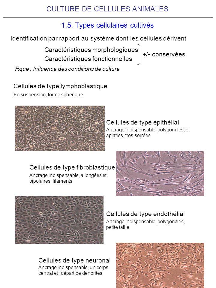 CULTURE DE CELLULES ANIMALES 1.5. Types cellulaires cultivés Identification par rapport au système dont les cellules dérivent Caractéristiques morphol