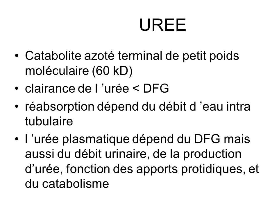 UREE Catabolite azoté terminal de petit poids moléculaire (60 kD) clairance de l urée < DFG réabsorption dépend du débit d eau intra tubulaire l urée