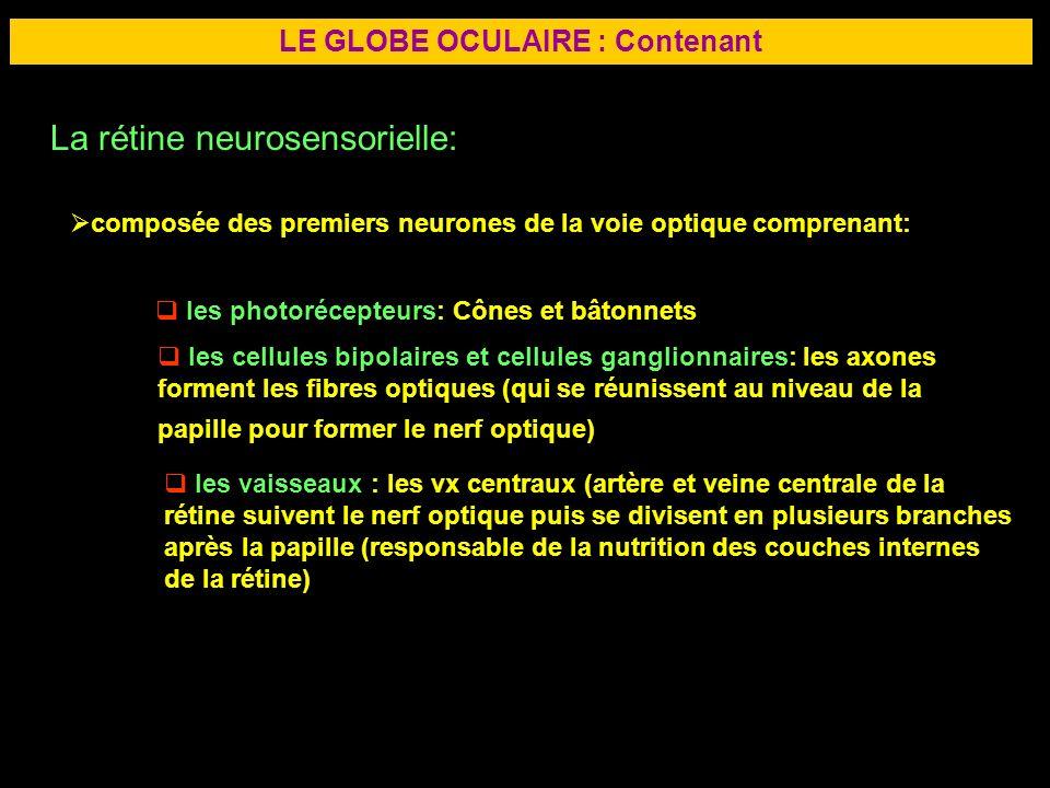 13 LE GLOBE OCULAIRE : Contenant La rétine neurosensorielle: composée des premiers neurones de la voie optique comprenant: les photorécepteurs: Cônes