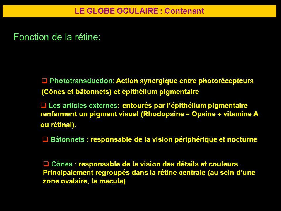 15 LE GLOBE OCULAIRE : Contenant Fonction de la rétine: Phototransduction: Action synergique entre photorécepteurs (Cônes et bâtonnets) et épithélium