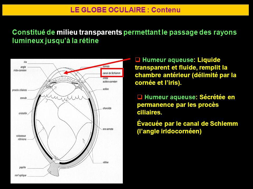 17 LE GLOBE OCULAIRE : Contenu Constitué de milieu transparents permettant le passage des rayons lumineux jusquà la rétine Humeur aqueuse: Liquide tra