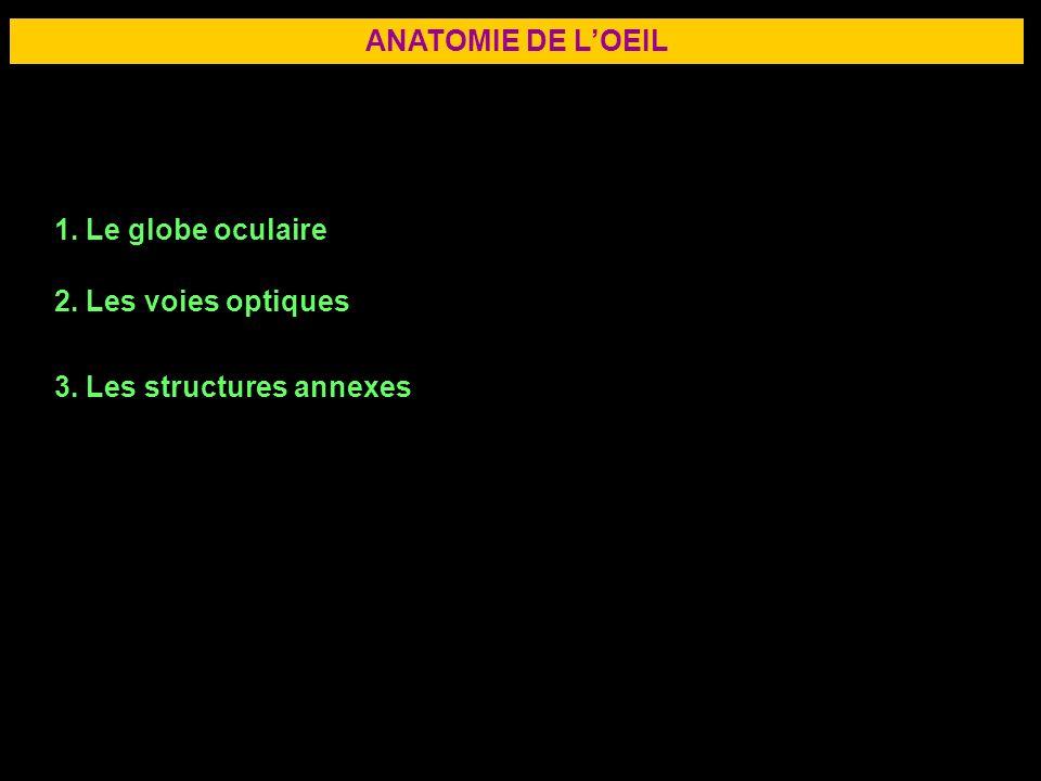 3 ANATOMIE DE LOEIL 1. Le globe oculaire 2. Les voies optiques 3. Les structures annexes