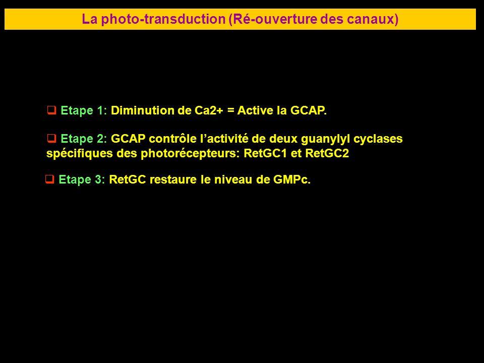 45 LA RETINE La photo-transduction (Ré-ouverture des canaux) Etape 1: Diminution de Ca2+ = Active la GCAP. Etape 2: GCAP contrôle lactivité de deux gu