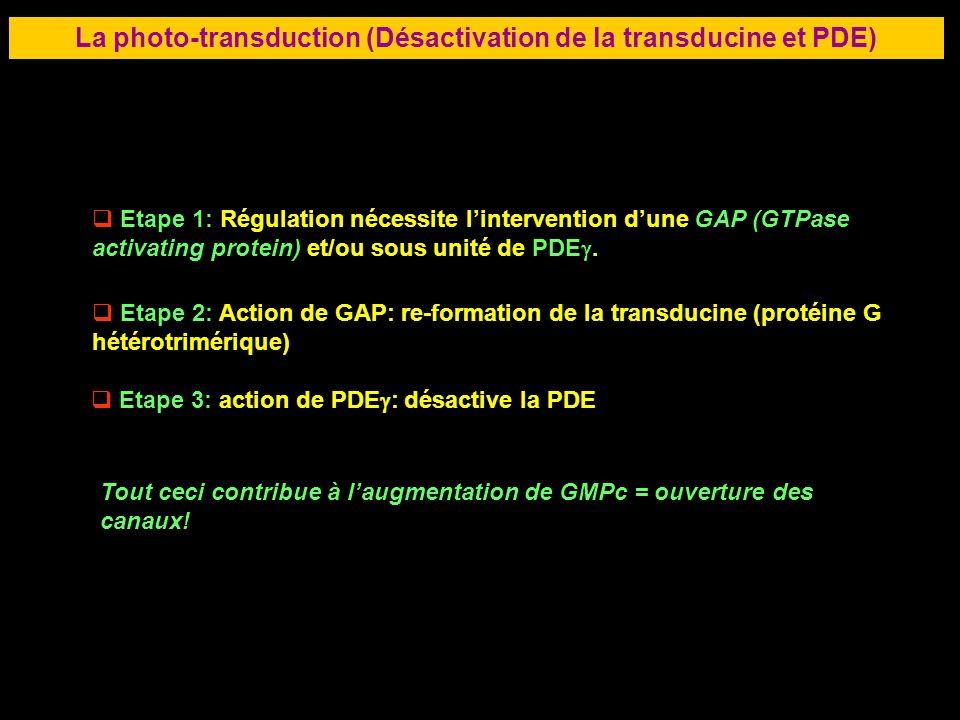 48 LA RETINE La photo-transduction (Désactivation de la transducine et PDE) Etape 1: Régulation nécessite lintervention dune GAP (GTPase activating pr