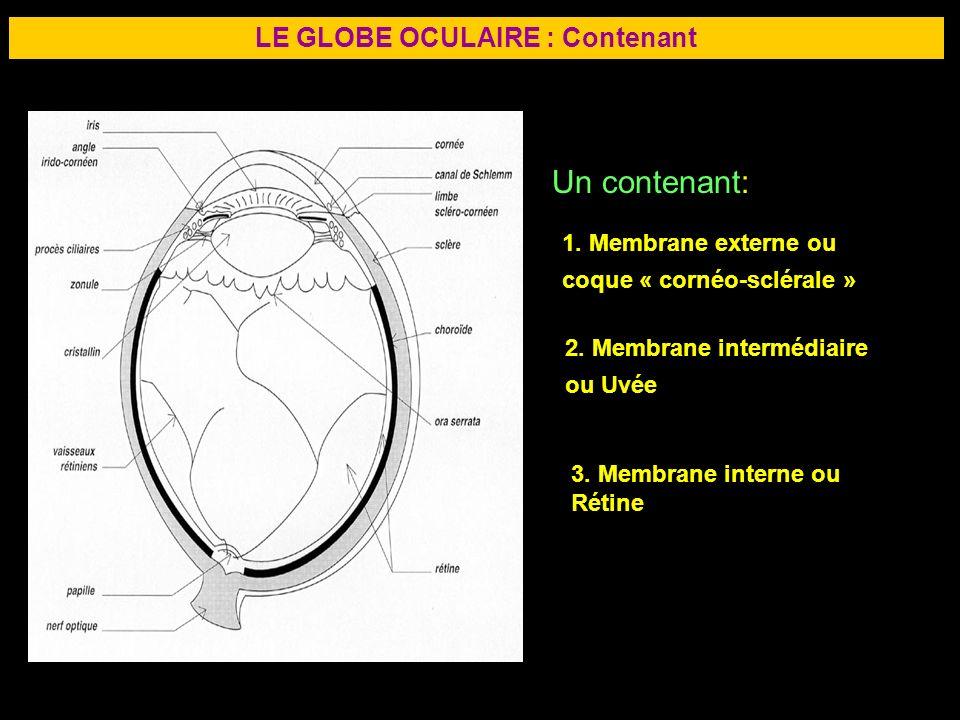 5 LE GLOBE OCULAIRE : Contenant Un contenant: 1. Membrane externe ou coque « cornéo-sclérale » 2. Membrane intermédiaire ou Uvée 3. Membrane interne o
