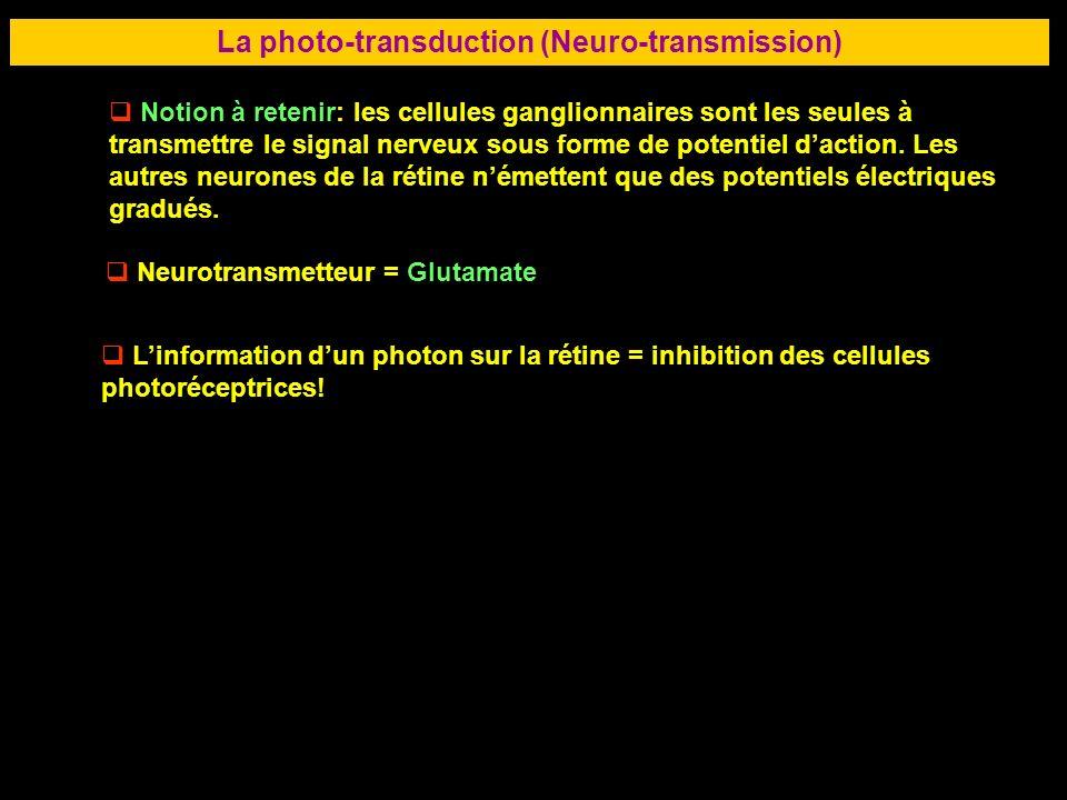 50 LA RETINE La photo-transduction (Neuro-transmission) Notion à retenir: les cellules ganglionnaires sont les seules à transmettre le signal nerveux