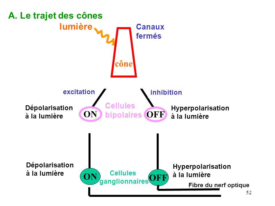 52 ON OFF Cellules ganglionnaires Fibre du nerf optique Dépolarisée à lobscurité hyperpolarisée à lobscurité glutamate A. Le trajet des cônes Cellules