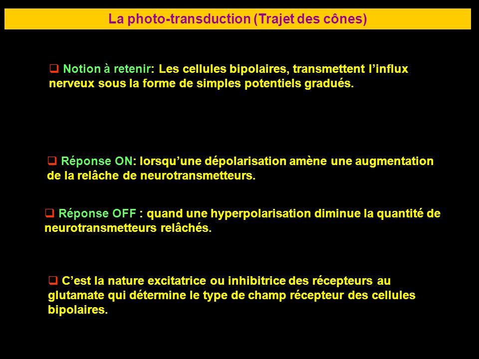 53 LA RETINE La photo-transduction (Trajet des cônes) Notion à retenir: Les cellules bipolaires, transmettent linflux nerveux sous la forme de simples