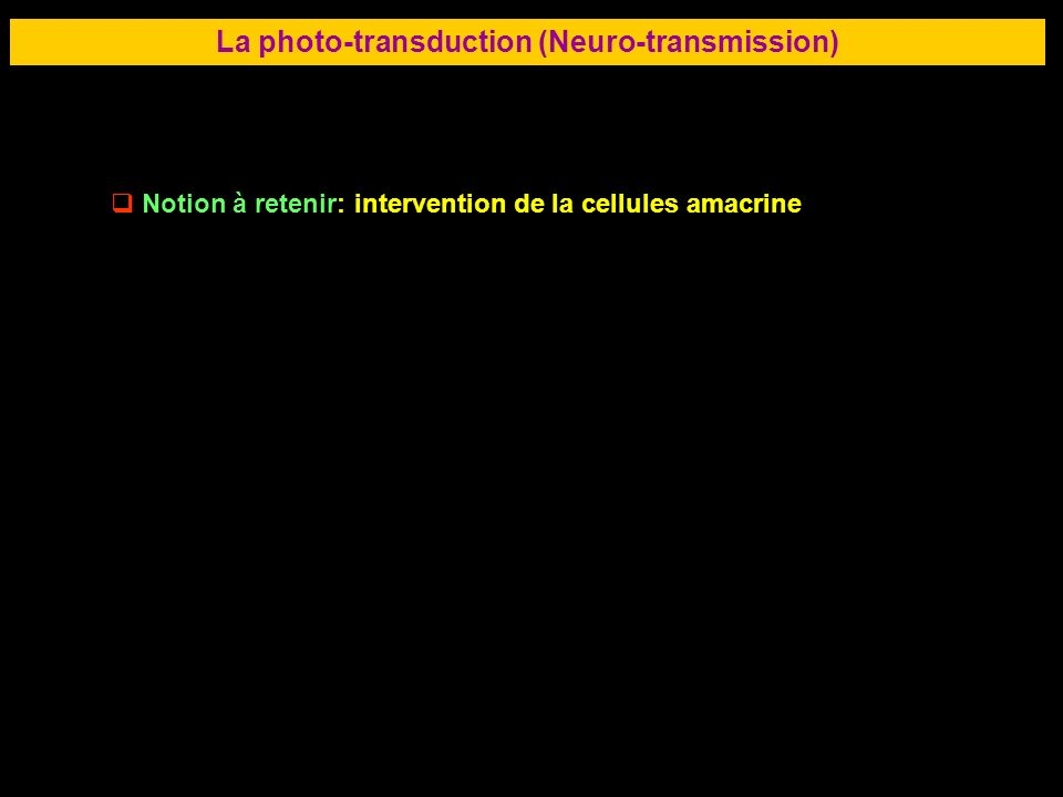 56 LA RETINE La photo-transduction (Neuro-transmission) Notion à retenir: intervention de la cellules amacrine