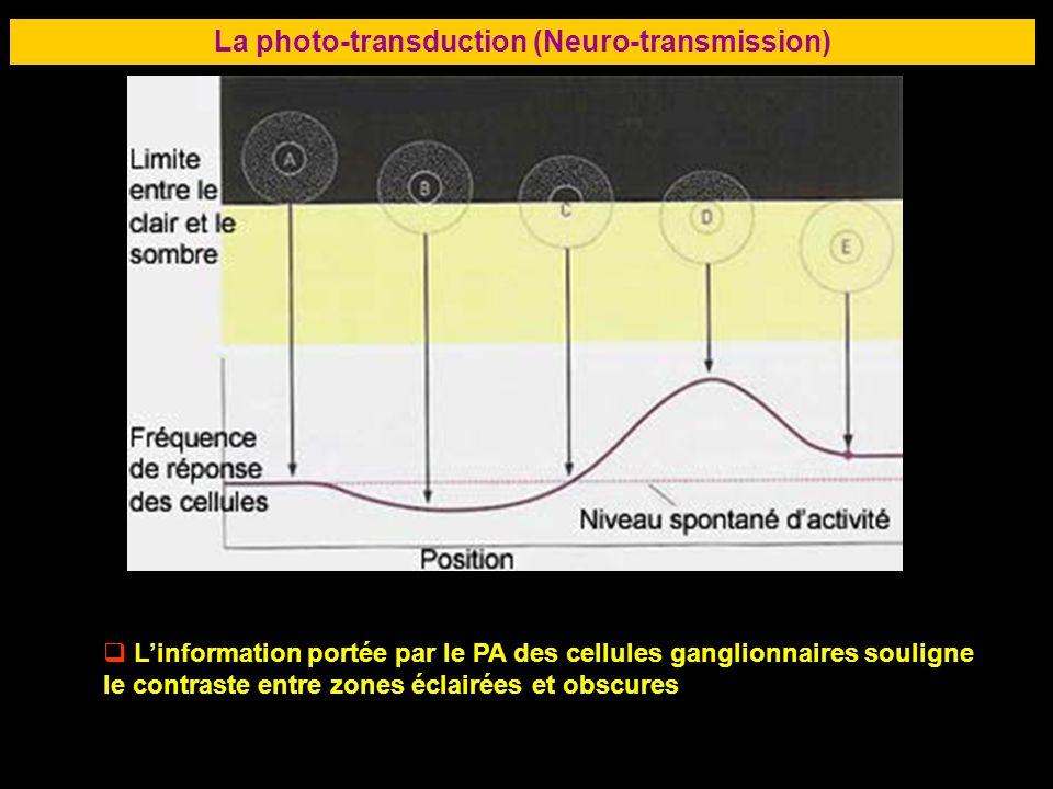 57 La photo-transduction (Neuro-transmission) Linformation portée par le PA des cellules ganglionnaires souligne le contraste entre zones éclairées et