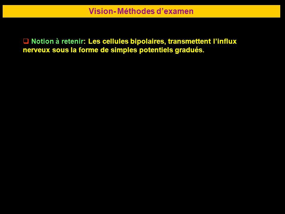 61 Vision- Méthodes dexamen Notion à retenir: Les cellules bipolaires, transmettent linflux nerveux sous la forme de simples potentiels gradués.