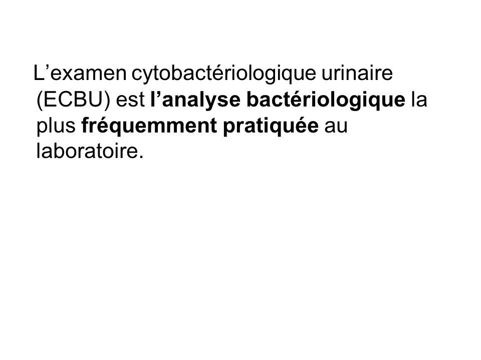 Lexamen cytobactériologique urinaire (ECBU) est lanalyse bactériologique la plus fréquemment pratiquée au laboratoire.