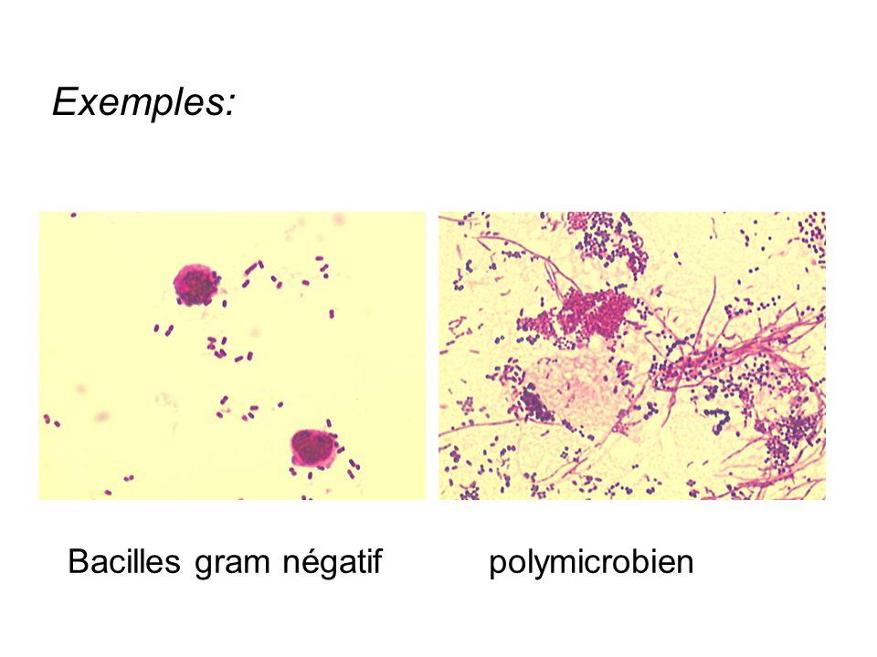 Exemples: Bacilles gram négatif polymicrobien