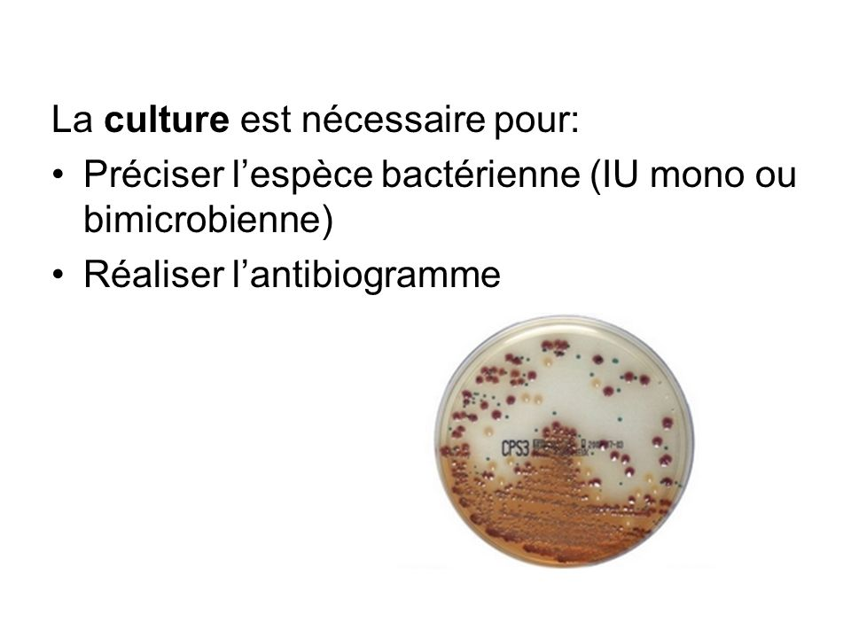 La culture est nécessaire pour: Préciser lespèce bactérienne (IU mono ou bimicrobienne) Réaliser lantibiogramme