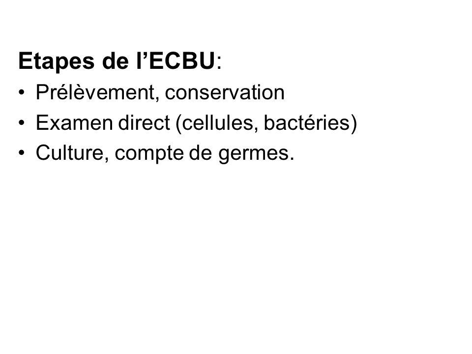 Etapes de lECBU: Prélèvement, conservation Examen direct (cellules, bactéries) Culture, compte de germes.