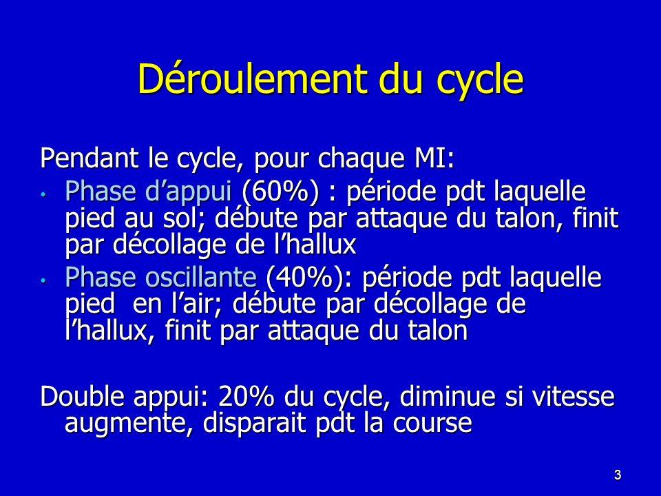 Déroulement du cycle Pendant le cycle, pour chaque MI: Phase dappui (60%) : période pdt laquelle pied au sol; débute par attaque du talon, finit par d
