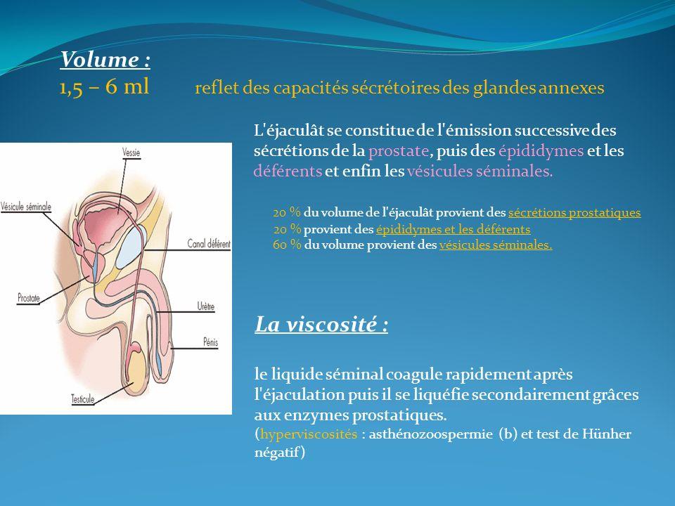 Volume : 1,5 – 6 ml reflet des capacités sécrétoires des glandes annexes L'éjaculât se constitue de l'émission successive des sécrétions de la prostat