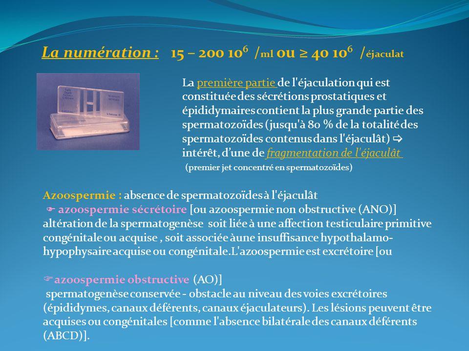 La numération : 15 – 200 10 6 / ml ou 40 10 6 / éjaculat La première partie de l'éjaculation qui est constituée des sécrétions prostatiques et épididy