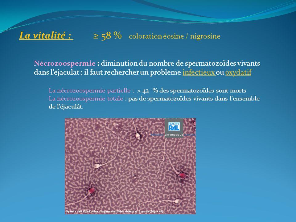 La vitalité : 58 % coloration éosine / nigrosine Nécrozoospermie : diminution du nombre de spermatozoïdes vivants dans léjaculat : il faut rechercher