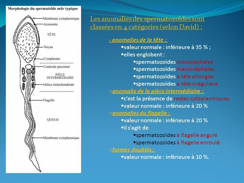 Les anomalies des spermatozoïdes sont classées en 4 catégories (selon David) : - anomalies de la tête : valeur normale : inférieure à 35 % ; elles eng