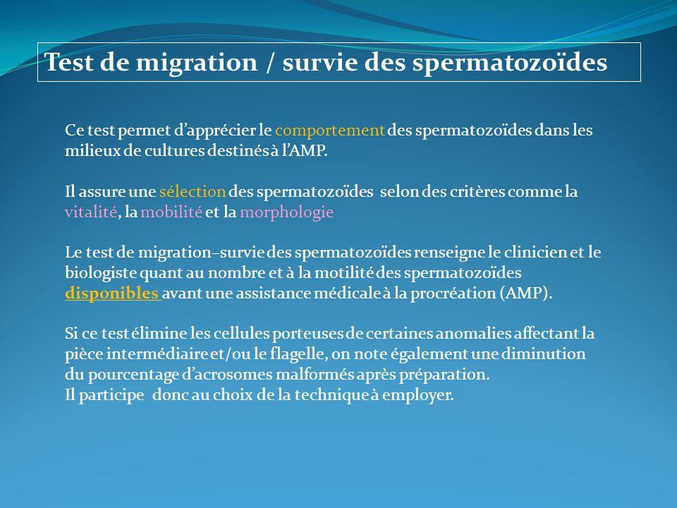 Test de migration / survie des spermatozoïdes Ce test permet dapprécier le comportement des spermatozoïdes dans les milieux de cultures destinés à lAM