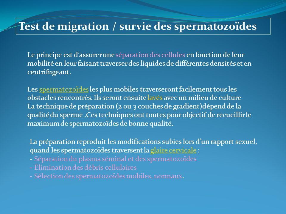 Test de migration / survie des spermatozoïdes Le principe est dassurer une séparation des cellules en fonction de leur mobilité en leur faisant traver