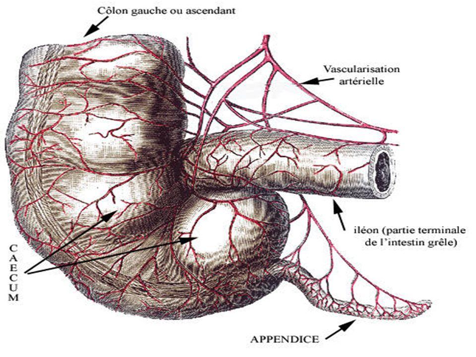 Lappendicectomie est réalisée par Mac Burney, ou par laparoscopie (surtout chez la femme) La pièce opératoire est confiée à lanatomopathologiste (+++), qui décèle parfois un adénocarcinome, nécessitant une reprise chirurgicale (hémicolectomie) Lantibiothérapie bactéricide est indiquée selon le stade et le terrain (comme les anti-coagulants)
