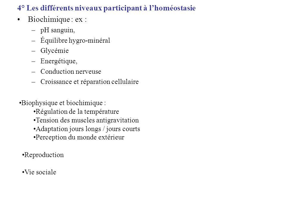 4° Les différents niveaux participant à lhoméostasie Biochimique : ex : –pH sanguin, –Équilibre hygro-minéral –Glycémie –Energétique, –Conduction nerv