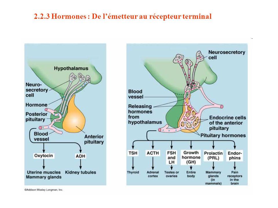 2.2.3 Hormones : De lémetteur au récepteur terminal