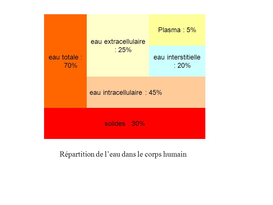 eau totale : 70% eau extracellulaire : 25% Plasma : 5% eau interstitielle : 20% eau intracellulaire : 45% solides : 30% Répartition de leau dans le co