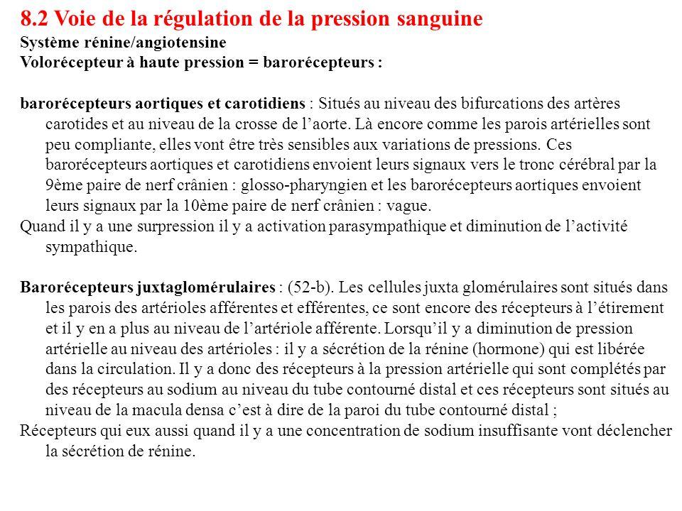 8.2 Voie de la régulation de la pression sanguine Système rénine/angiotensine Volorécepteur à haute pression = barorécepteurs : barorécepteurs aortiqu