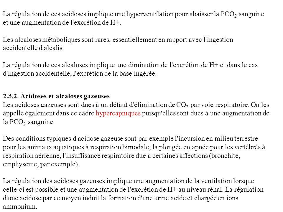La régulation de ces acidoses implique une hyperventilation pour abaisser la PCO 2 sanguine et une augmentation de l'excrétion de H+. Les alcaloses mé